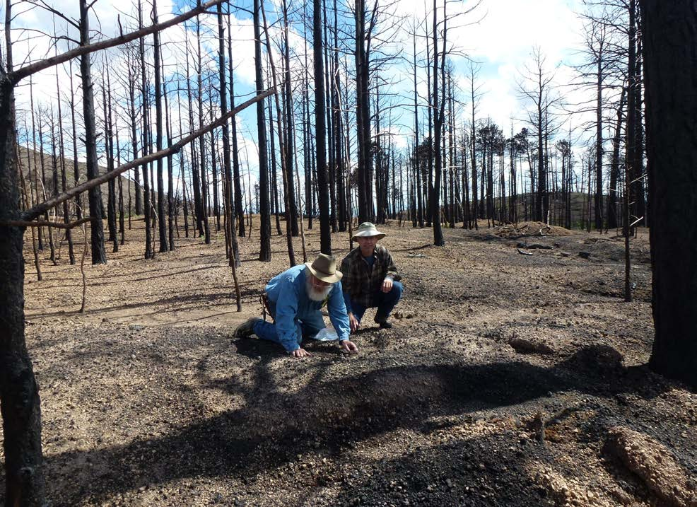 Carbon Cycling In Southwestern Forests: Reservoirs, Fluxes, And The Effects Of Fire Management