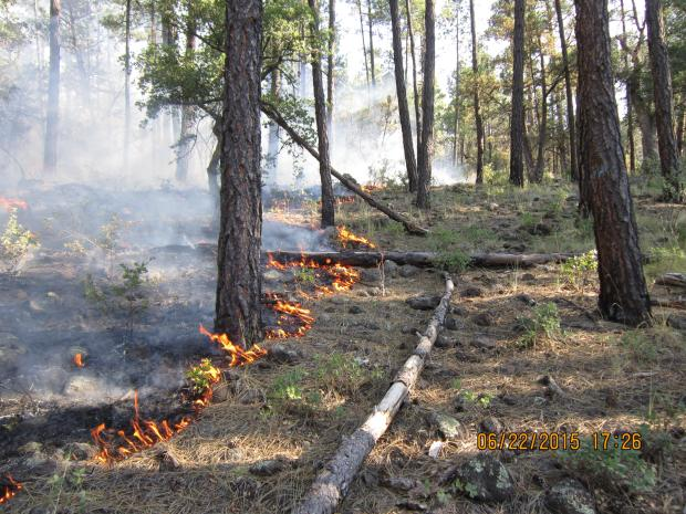 Fire Management On The San Carlos Apache Reservation – September 10, 2015