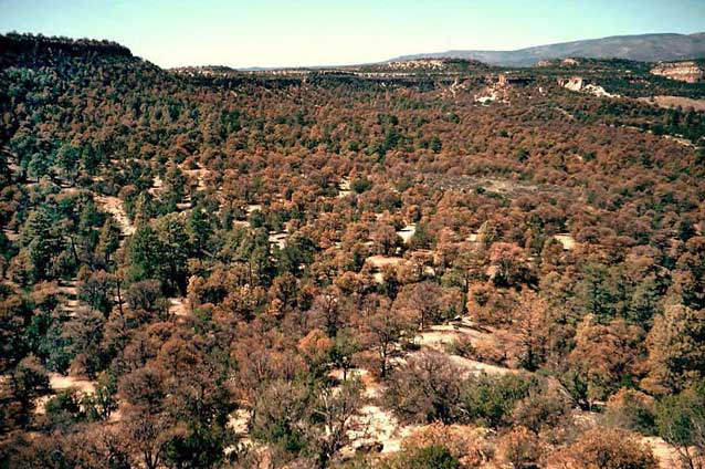 March 1, 2017: Fuels Treatments And Ecological Values In Piñon-juniper Woodlands: Vegetation, Birds, And Modeled Fire Behavior